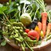家庭菜園者向け~土作りから始める自然農法~